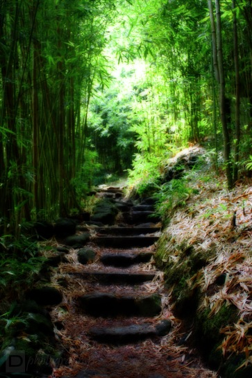 Bamboo Forest ~ Maui, Hawaii