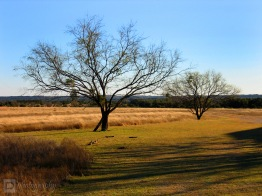 Sweet Lucy Ranch ~ Lampasas, Texas