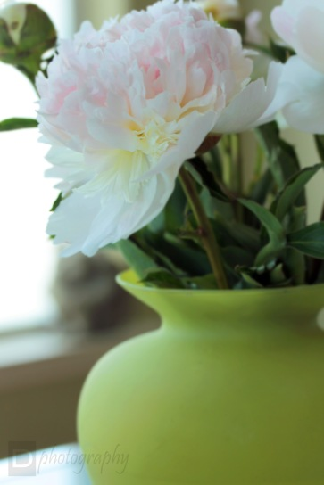 Peonies in Vase ~ Valencia, California